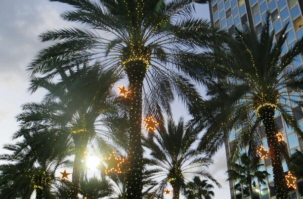 Tropical palm trees with Christmas decorations Photo by Magda Ehlers on Pexels